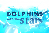 """""""Dolphins with the Stars"""" sofre primeira baixa"""